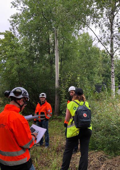 Kolme oranssitakkista työmiestä ja yksi keltaliivinen nainen ovat metsässä tarkastelemassa puita.